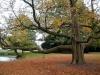 Interrogazione di Civiltà Vigevanese per porre a dimora un albero per ogni neonato, così come previsto dalla legge